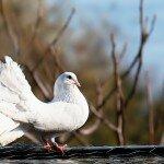 AFBO-Birdy